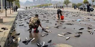 Il mistero dei pesci che cadono da cielo