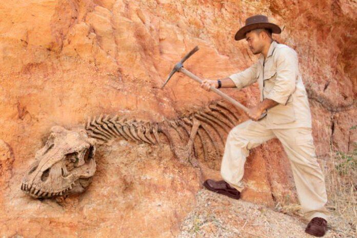 reperti fossili dinosauro