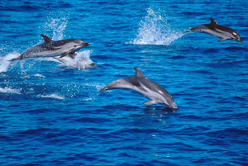 I Delfini non sono più intelligenti di altri animali