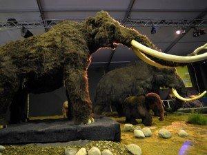 Sangue liquido di Mammut trovato in Siberia
