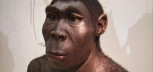 news homo erectus