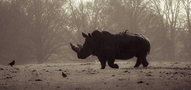 Il Kenya impianterà microchip nella corna dei rinoceronti