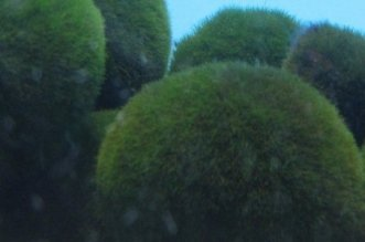 sfere-verdi-australia