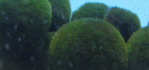 news green balls