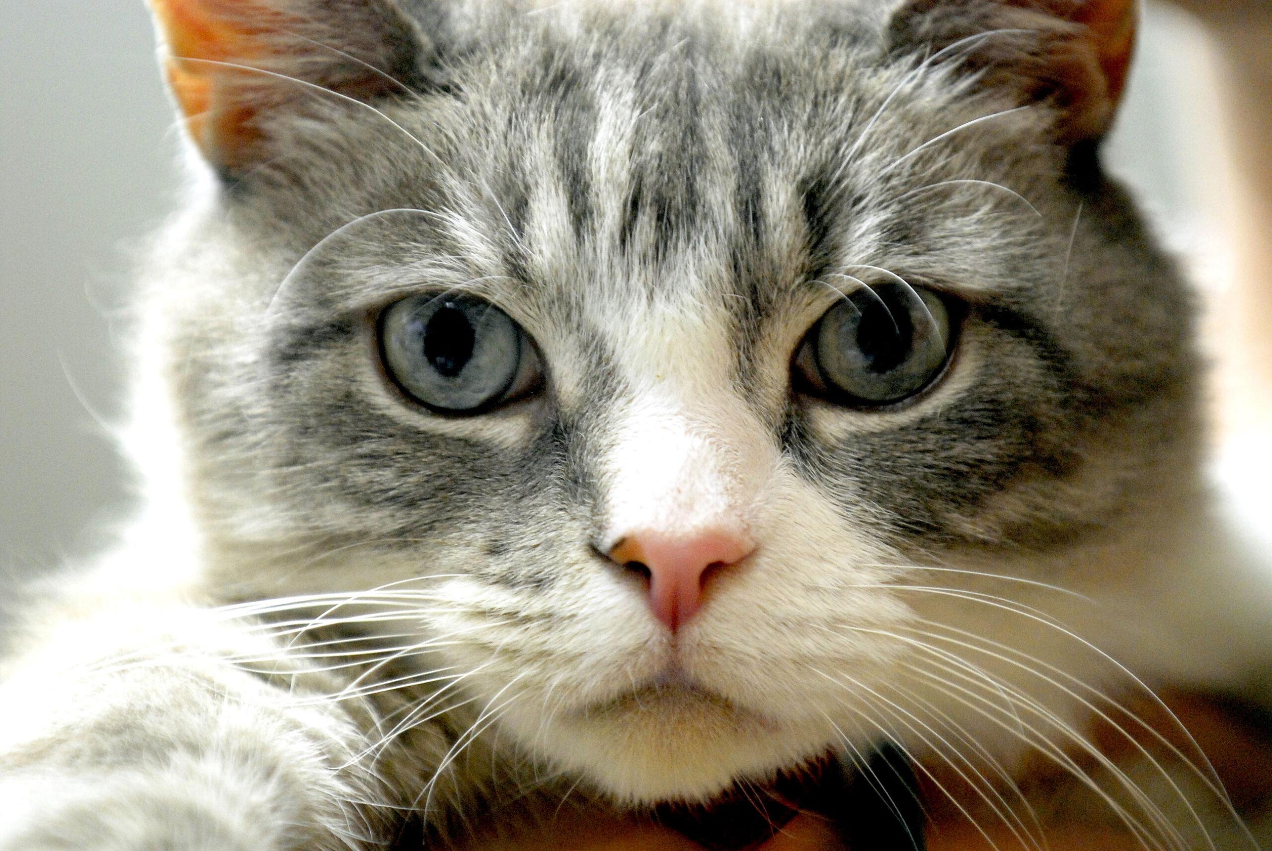 I gatti possono scoprire e risolvere delitti
