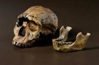 teschio-milioni-anni