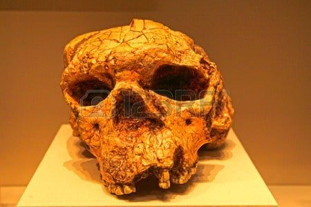 cranio cina evoluzione