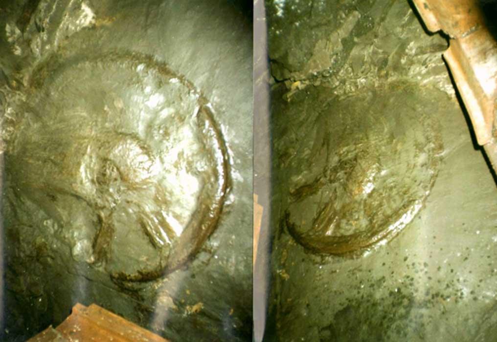 Scoperta ruota risalente a 300 milioni di anni fa