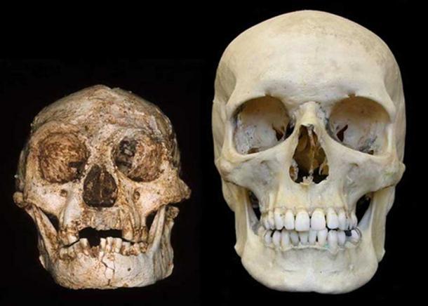 Homo_floresiensis_scheletro
